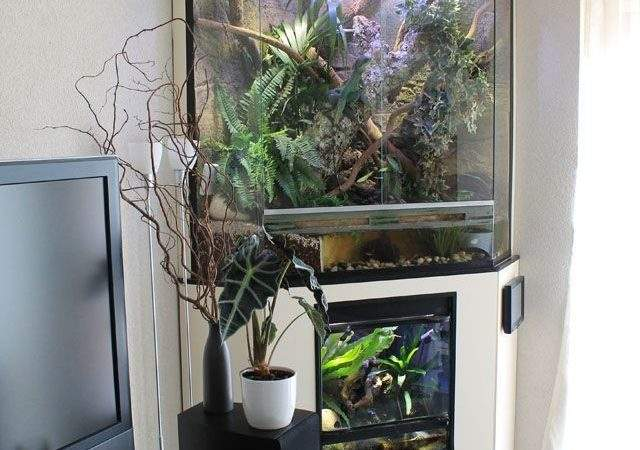 Best Corner Aquarium Ideas Pinterest Vivarium