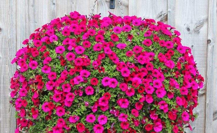 Best Hanging Flower Baskets Ideas Pinterest