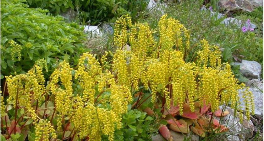 Blooms All Seasons Beautiful Unusual Plants