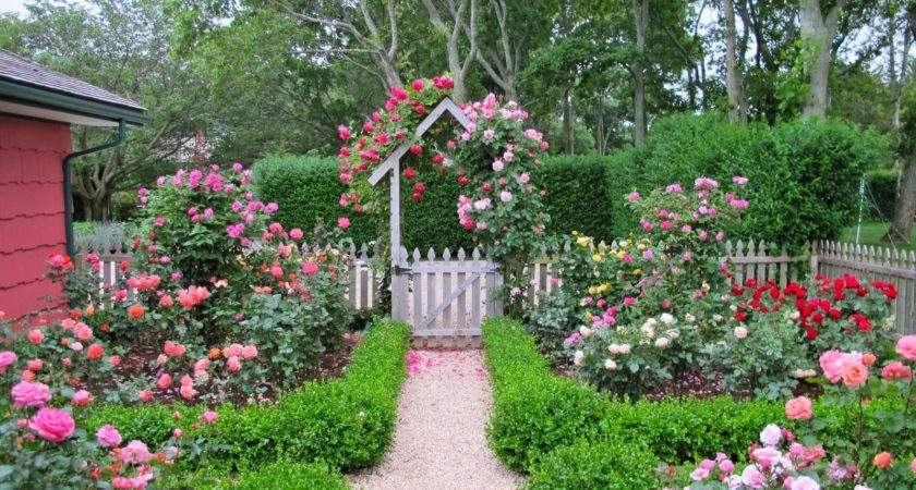 Cottage Garden Design Roses Wilson Rose