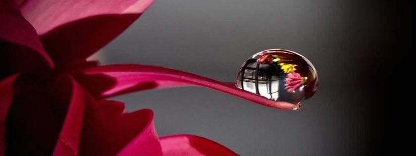 Facebook Cover Petal Waterdrops