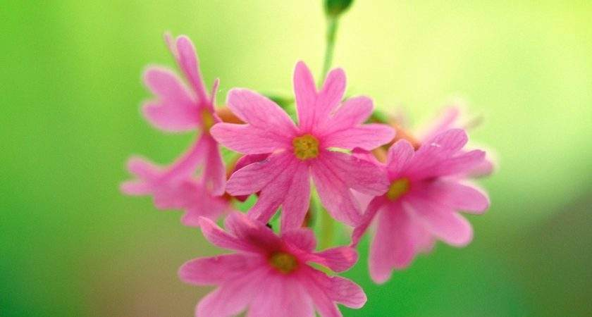 Fine Art Landscape Photography Pink Blooming Flowers