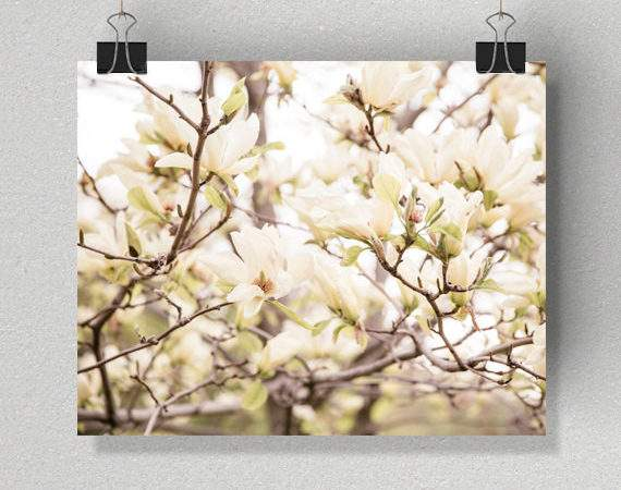 Flower Photography Spring Blooms Neutral Wall Art White
