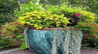 Garden Container Ideas Potted Plant