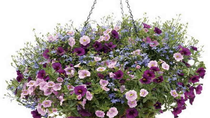 Gardening Landscaping Various Design Hanging Basket