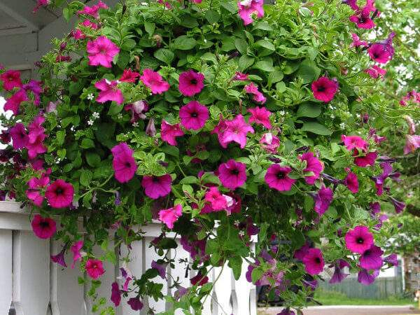 Hanging Flower Planter Ideas Photos Top