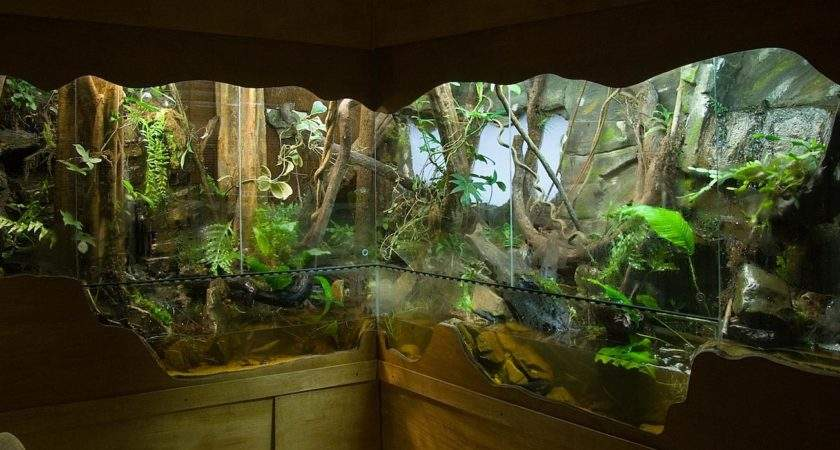 Inspiring Ideas Pinterest Vivarium Aquascaping