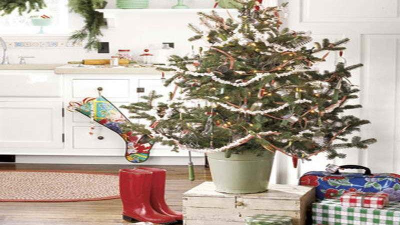 Miscellaneous Gorgeous Country Living Christmas Trees
