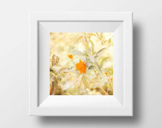 Neutral Wall Art Beige Nature Photography