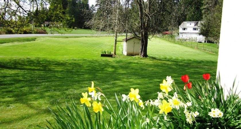 Panoramio Spring Flower Bed Front House