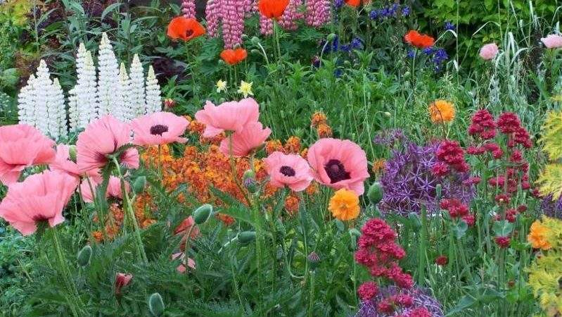 Poppy Lauren Vintage English Country Garden