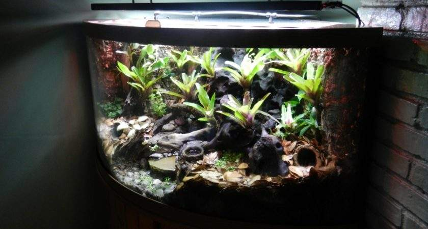 Turning Aquarium Into Vibrant Vivarium Pet Product