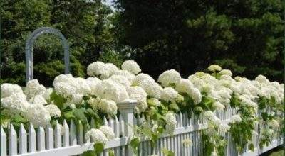 White Picket Fence Garden Quotes