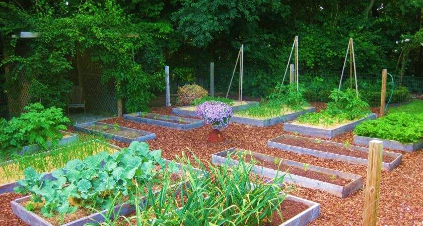 Your Veggie Patch Coming Along